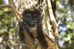 The island of Madagascar offers an off the beaten track holiday with beaches rainforest and rare wildlife and fauna