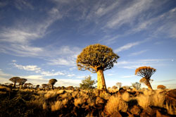quiver tree camp namibia