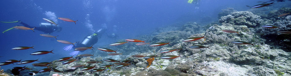 THE 10 BEST Nungwi Scuba & Snorkeling Activities (with ...
